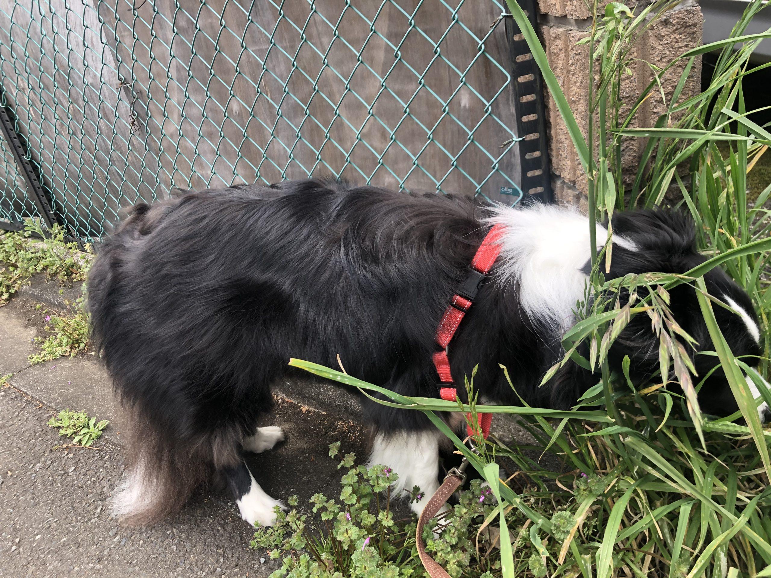 全ての引っ張る犬におすすめしたいお散歩ハーネス。イージーウォークハーネス